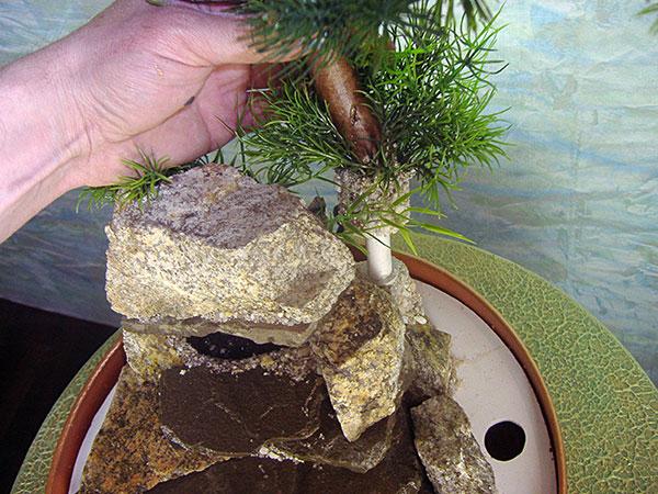 Торт сметана творог желатин фрукты фото 4